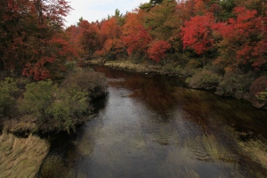 """Pocono Stream in Fall 30"""" x 20"""" Giclee on Canvas Limited Edition 3/25 $425.00"""