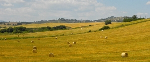 "Tuscan Bales 36"" x 14"" Giclee on Canvas Limited Edition 5/25 $425.00"